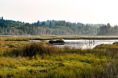 Wetlands grasslands along the sound royalty free stock images