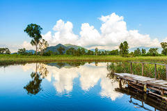 Wetlands and green forest Royalty Free Stock Photography