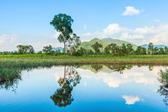 Wetlands and green forest Royalty Free Stock Images