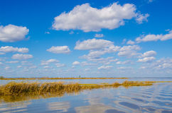 Wetlands under blue sky with white clouds Stock Image