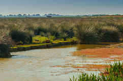 Wetlands in the Kizilirmak delta Royalty Free Stock Photos