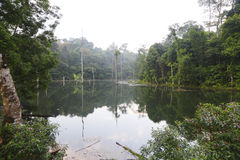 Wetlands at Kota Damansara, Malaysia. Taken at dusk, with reflection stock images