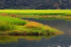 Wetlands landscape royalty free stock photos