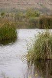 Wetlands Landscape Royalty Free Stock Image