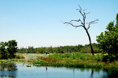 Wetlands landscape Texas USA. Wetlands landscape picure made in Texas USA Royalty Free Stock Images