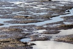 Wetlands at low tide. Showing mud and tide pools royalty free stock image