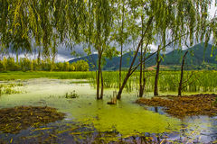 Wetlands, marsh Royalty Free Stock Photos