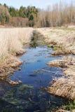 Wetlands, Marsh or Bog Royalty Free Stock Image