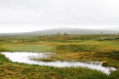 Wetlands and misty hills. Landscape with green grass and marsh, a waterhole and misty hills in the back Royalty Free Stock Photography
