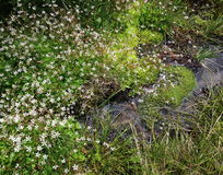 Wetlands with moss and wildflowers Royalty Free Stock Photos