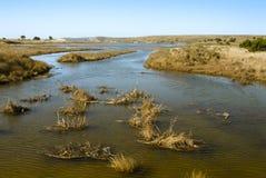 Wetlands near seashore. Wetland wildlife habitat, Point Reyes Seashore, California Stock Images