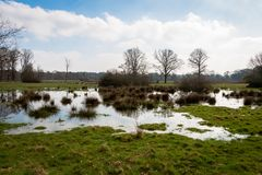 Wetlands in the Netherlands province Overijssel stock images