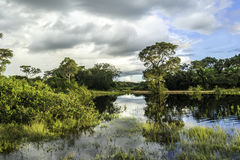 Wetlands in Pantanal, Brazil, South America Royalty Free Stock Photography