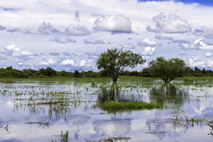 Wetlands in Pantanal, Brazil, South America Stock Images