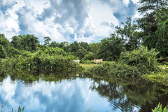 Wetlands in Pantanal, Brazil, South America Stock Photo