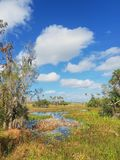 Orlando Wetlands Park. Wetlands park near Orlando, Florida, recognized for abundance of waterfowl encounters and bird watching opportunities royalty free stock photo