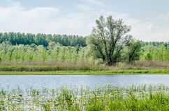 Wetlands in Petrovaradin near the city of Novi Sad. By the river Danube stock photography