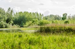 Wetlands in Petrovaradin near the city of Novi Sad. By the river Danube royalty free stock photo
