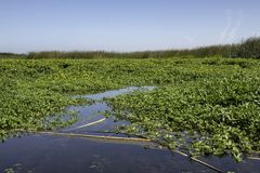 Wetlands. With plants growing in a lake blue sky In background stock photo
