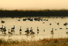 Wetlands Refuge Royalty Free Stock Photos