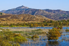 Wetlands, San Diego County, California. A wetlands area at the edge of Lake Hodges in Escondido, San Diego County, California, alongside a walking/hiking/biking royalty free stock images
