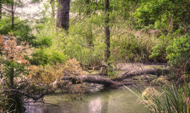 Wetlands Scene. Wetlands marshy area with water and wildlife stock photo