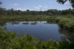 A wetlands scene Royalty Free Stock Images