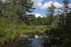 A wetlands scene Stock Photography