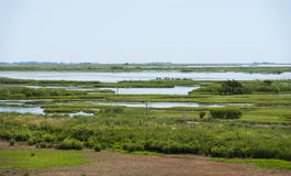 Wetlands in Southern New Jeresy. Vast green wetlands spread out in southern Jersey Royalty Free Stock Images