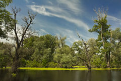 Wetlands in the spring Royalty Free Stock Images