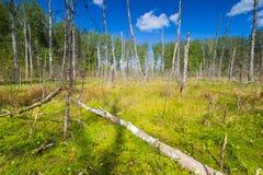 Wetlands at springtime Royalty Free Stock Photo