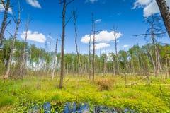 Wetlands at springtime Stock Photos