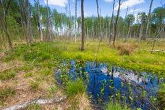Wetlands at springtime Royalty Free Stock Image