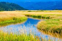 Wetlands of Steigerwald Lake National Wildlife Refuge. In Clark County, Washington royalty free stock photography