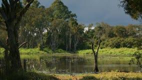 Wetlands Storm 3. Wetlands, Queensland, Australia after a severe storm stock photography