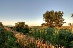Wetlands Sunrise stock images