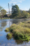 Wetlands. Supports of a long bike bridge loooms over an urban wetlands dotted with swimming waterfowl Stock Photos