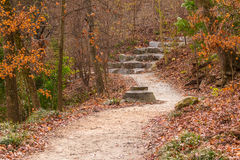 Wetlands Trail in Piedmont Park, Atlanta, USA. The Wetlands Trail and thicket of bare trees in the Piedmont Park in autumn day, Atlanta, USA royalty free stock photography