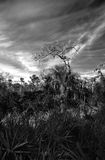 Wetlands Tree Royalty Free Stock Photos