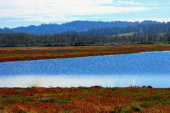 Wetlands. View of wetlands in fall color Stock Images