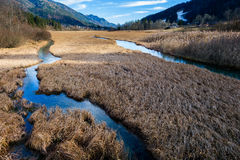 Wetlands with water channels and grass Stock Photography