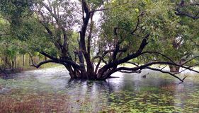 Wetlands. In Tree royalty free stock photos