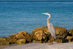 Wetlands Wildlife royalty free stock photography