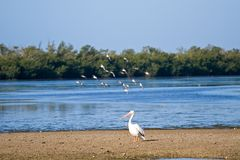 Wetlands Wildlife. Wildlife refuge birds on an island nature perserve in florida Stock Photo