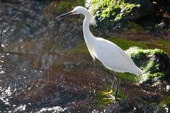 Wetlands Wildlife. Wildlife refuge birds on an island nature perserve in florida Stock Photos