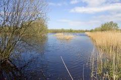 Wetlands wildlife reserve in Somerset, UK Stock Photography