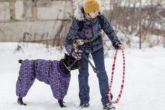 Wettbewerb für Hunde Stockfotografie
