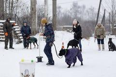 Wettbewerb für Hunde Lizenzfreie Stockfotos