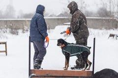 Wettbewerb für Hunde Lizenzfreie Stockbilder