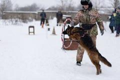 Wettbewerb für Hunde Stockfoto